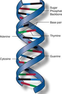 DNA Full Form - javatpoint