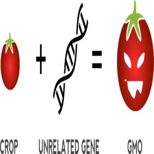 GMO full form